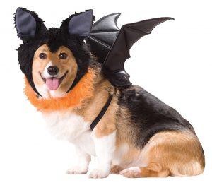 PET20103_Bat