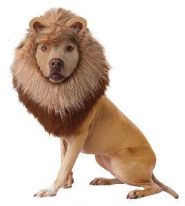 PET20123_Lion