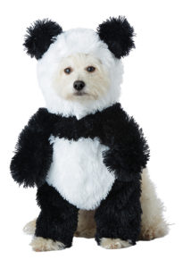 PET20163_PandaPooch