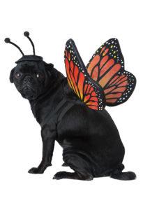 PET20164_MonarchButterfly